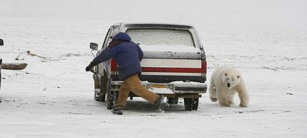 car-humor-funny-joke-road-street-drive-driver-hide-and-seek-polar-bear-snow-1